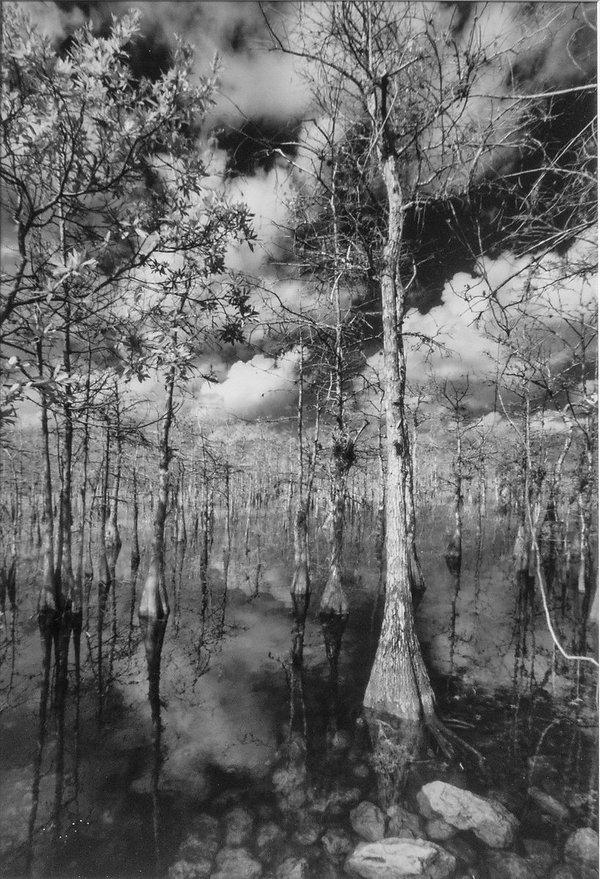 Everglades Cypress.jpg