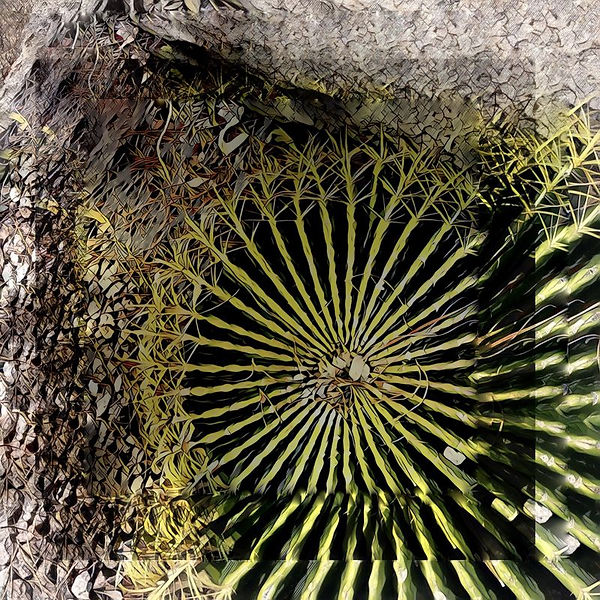 p_el_conquistador_barrel_cactus.jpg
