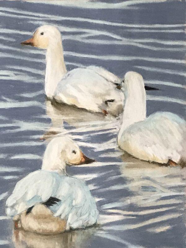 three_snow_geese.jpg