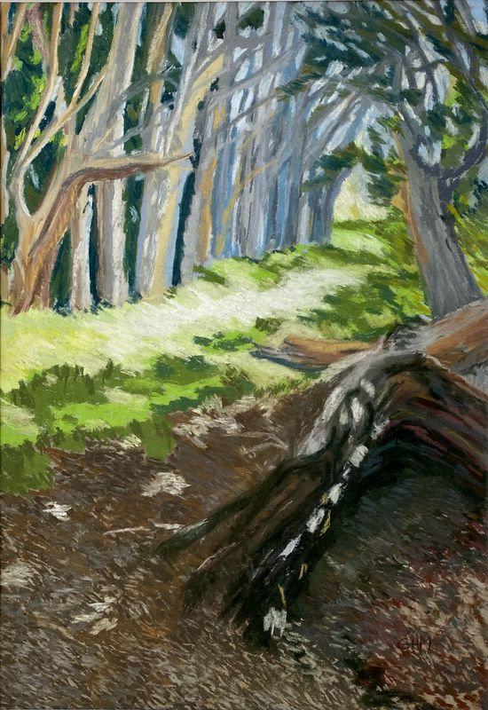 woods_at_seal_cove.jpg