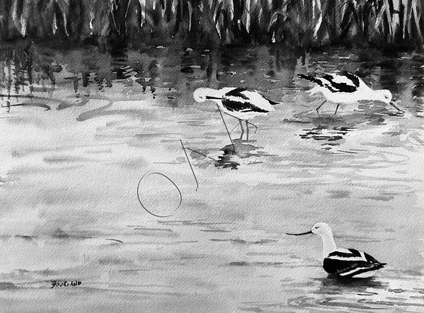 avocets_at_meeker_slough_1.jpg