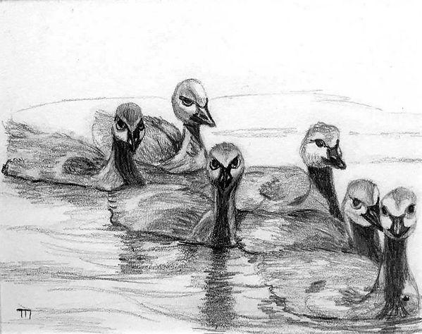 33_tina_nelson_sic_baby_swans.jpg