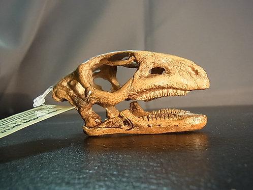 ガスパリニサウルス頭骨レプリカ