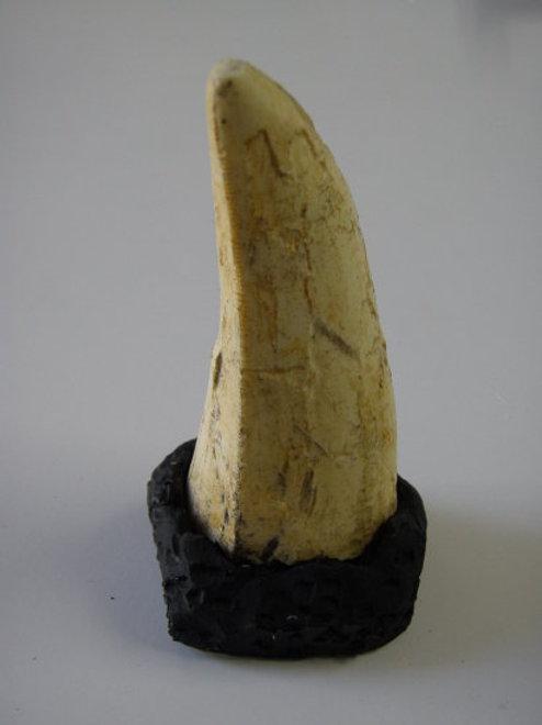 ティラノサウルスの歯・大(ベースつき)レプリカ