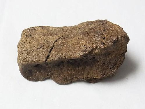 トリケラトプス頬骨実物化石