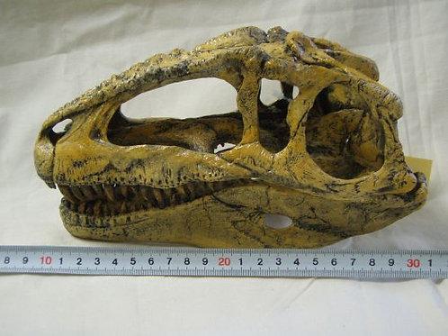 ギガノトサウルス頭骨レプリカ1/9サイズ