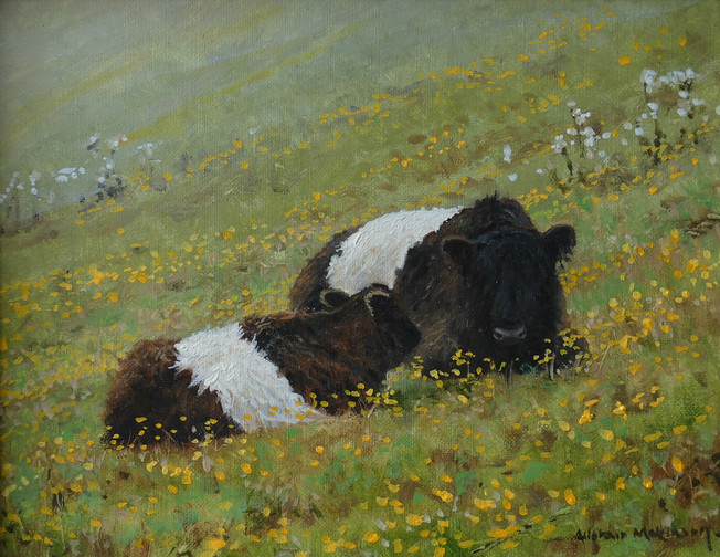 Beltie Cow and Calf
