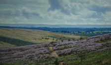 Bransdale Moor