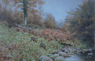 Autumn Roe