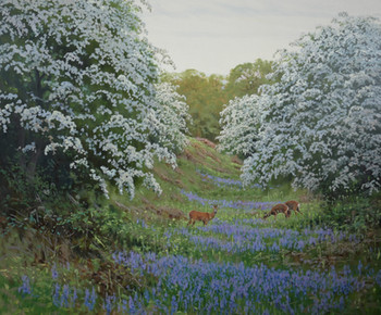 Hawthorn and Bluebells