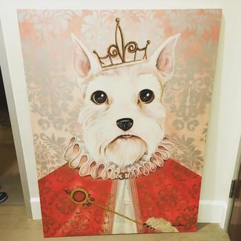Briestine-Princess-Crown-Schauzer-Dog-Co