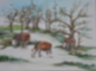 snow cows.jpg