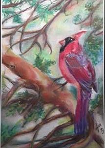 cardinal (1).jpg