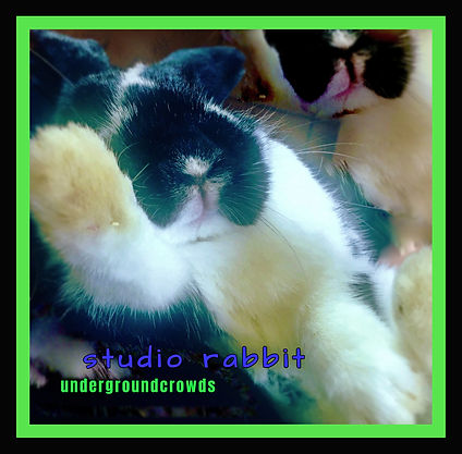 studio rabbit.jpg