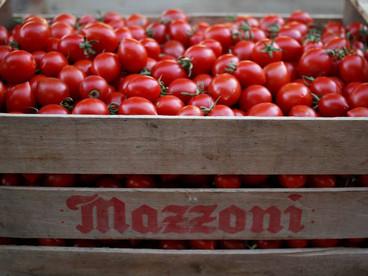 Festa del pomodoro Wir laden ein zum traditionellen Tomatenfest 08/2016