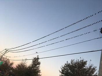 birds on telephone wire.jpg