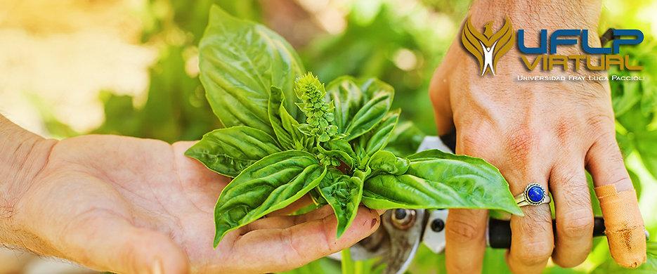 Diplomado en Tratamientos con Plantas Medicinales En Línea