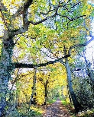 Tree path.jpg