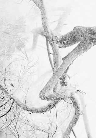 rota tree A4 2.jpg