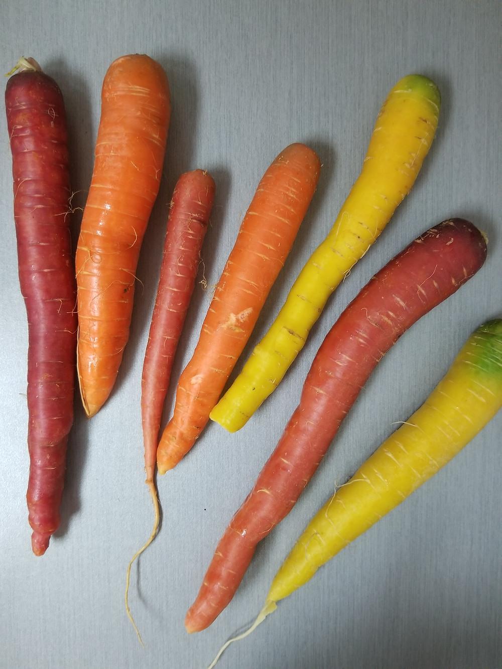 carrots, fall, rainbow, unicorn