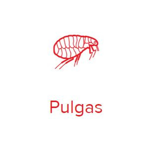 pulga.JPG