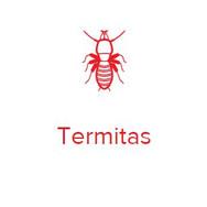 termitas.JPG