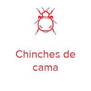 chinche.JPG