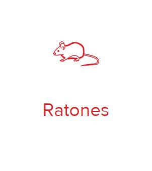 ratones.JPG