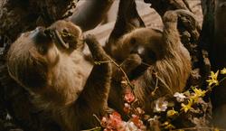 ZSL - Rainforest World