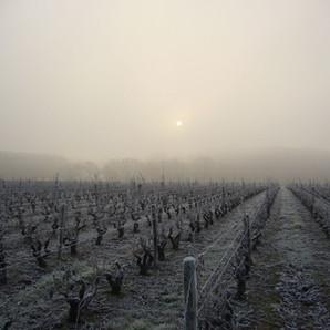 xavier frissant vignes hiver2.jpg