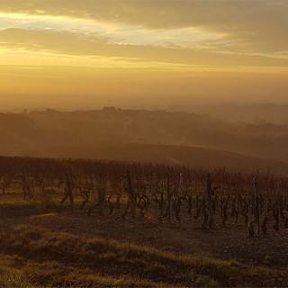 domaine des crais vignes3.jpg