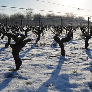 xavier frissant vignes froid.jpg