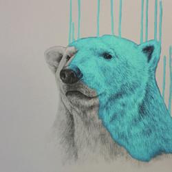 Hey There, Polar Bear - Aqua