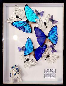 R2-D2 envolée fournie 1.jpg