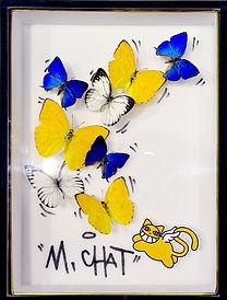 Mr Chat III 1.jpg