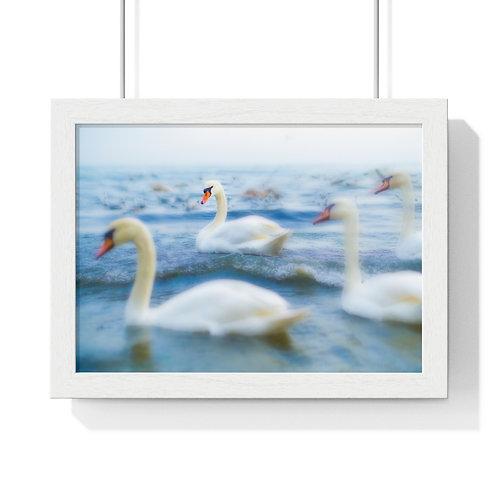 """""""Swan"""" Premium Framed Horizontal Poster"""
