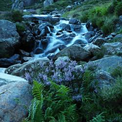Waterfall & Heather Llyn Idwal