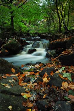 Wyming Brook Autumn leaves