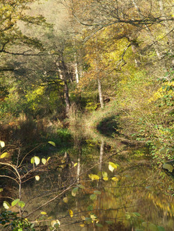 Cromford canal reflections