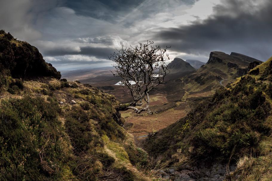 The Tree Quirang, Skye