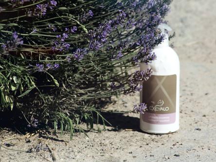CXEVALO Lavendel Shampoo