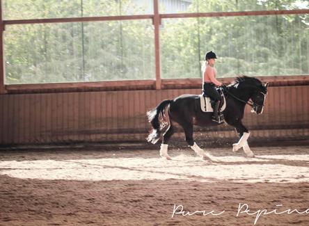 3 Arten von Pferdebesitzern