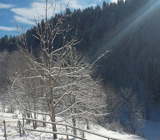 photo hiver2.jpg