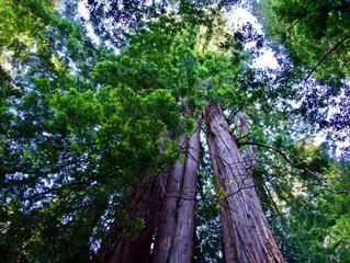 Restore our Ecosystem Initiative