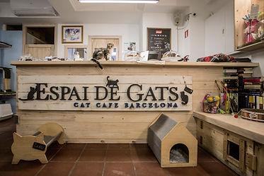 Welcome to Espai de Gats.jpg