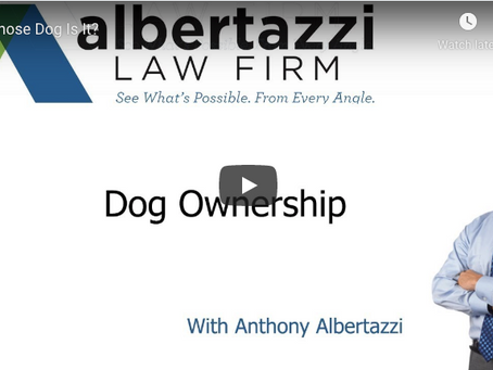 Dog Ownership | Albertazzi Law Firm