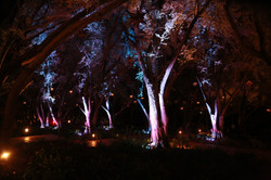 Outdoor Tree Uplighting
