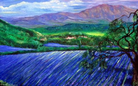 Lavender in Ojai