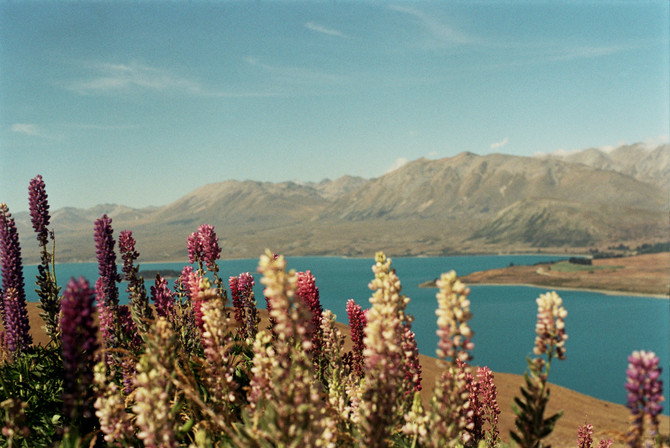 Travelogue: South NZ | Mt John + Lake Pukaki + Mt Cook on Film