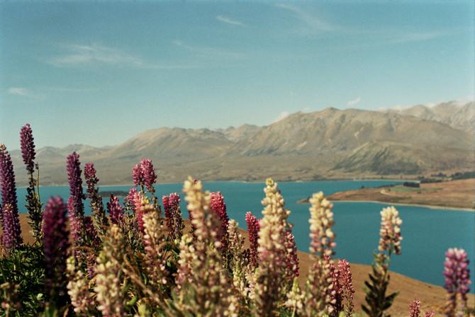 Travelogue: South NZ | Mt John + Lake Pukaki + Mt Cook on Film